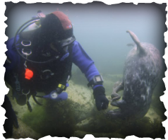 Andy with a Seal - medway sub-aqua club